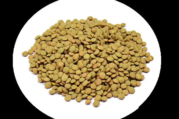 lenticchie-600x400-1-1.png