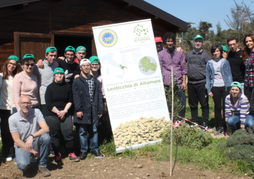 Progetto ALTIS : il Consorzio della Lenticchia di Altamura I.G.P. e i ragazzi dell'ANffAS seminano varietà differenti di lenticchia